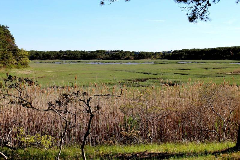 Ever changing tidal marsh views