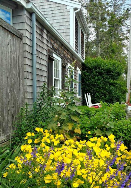 Summer blooms in Provincetown