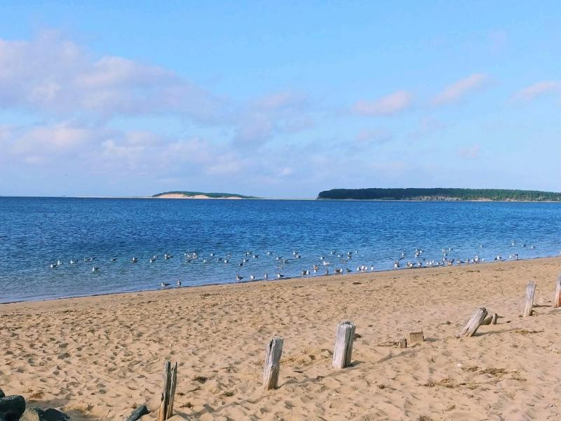 View of Great Island from Mayo Beach