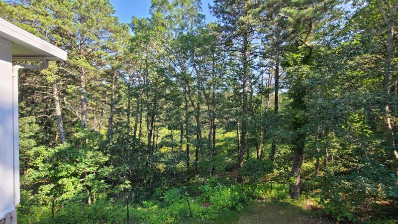 Wooded views from deck