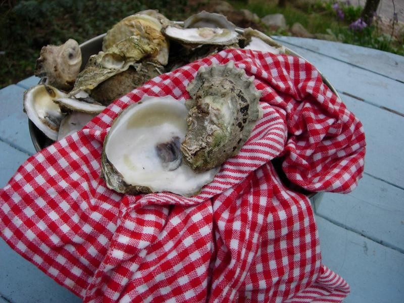 Wellfleet oysters on the porch