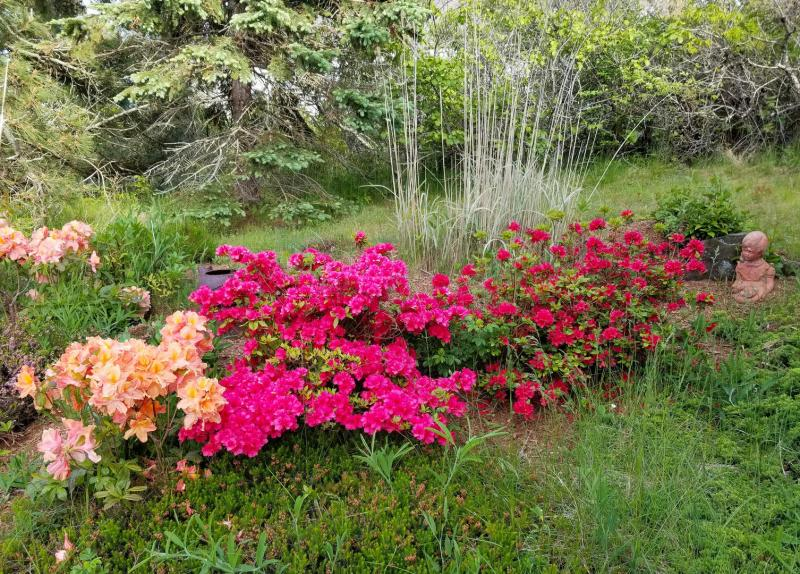 Beautiful mature plantings and flowers