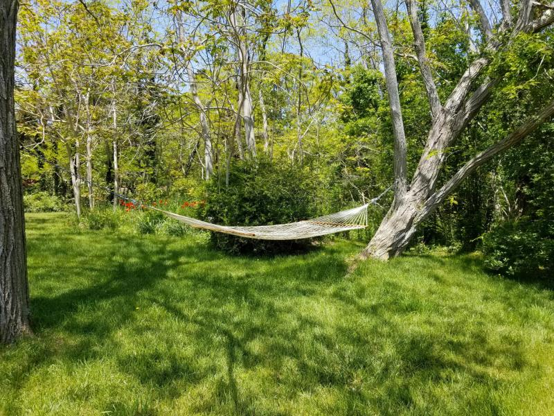 Hammock for relaxing with a good book