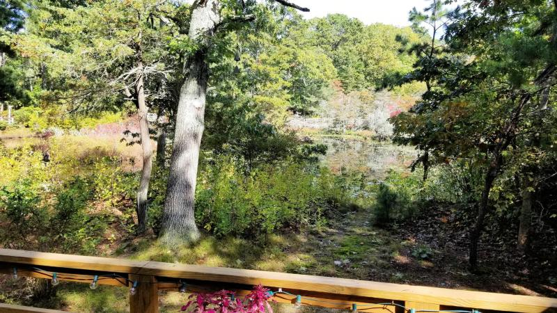 Views of ornamental pond from deck