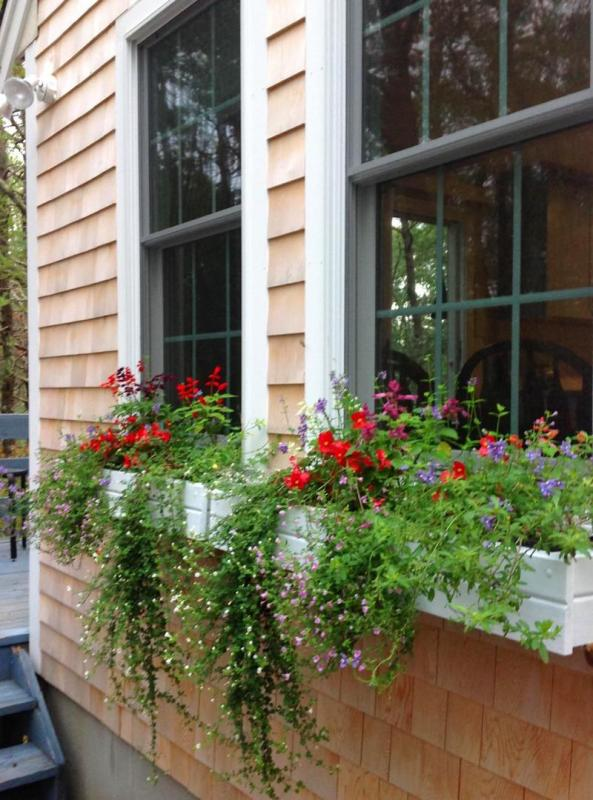 Window boxes in bloom